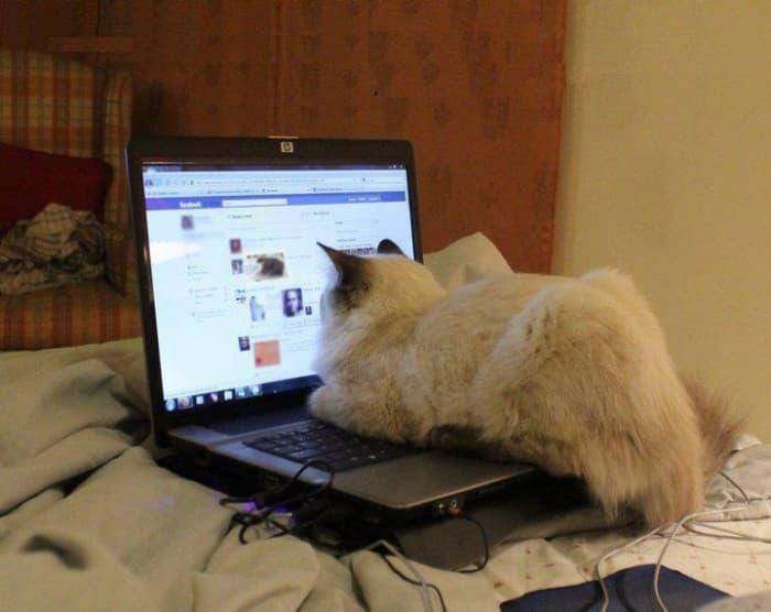 facebook ضحكة تقنية: أكتب الرقم 1 لترى مفاجأة أو 3 لتختفي القطة